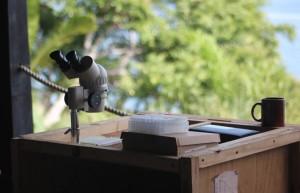 Madagascar Volunteer - parasitoid wasps - entomology