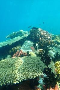 Coral Reef - Madagascar Gap Year