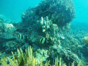 Volunteering in Madagascar - Turtle Towers - Moorish Idol