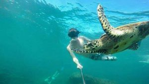 Volunteering in Madagascar - Turtle Towers - Hawksbill turtle