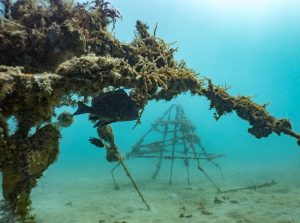 Madagascar Volunteer - Artificial Reef Project Update